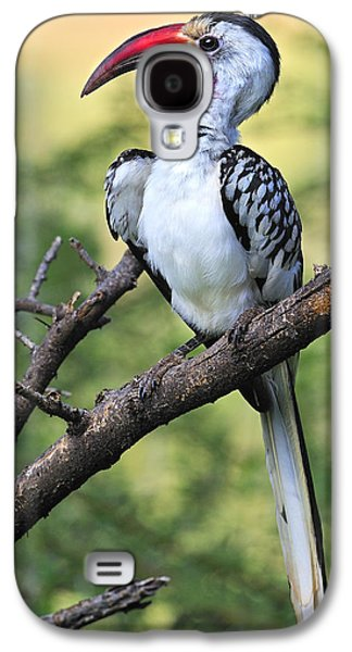 Red-billed Hornbill Galaxy S4 Case by Tony Beck