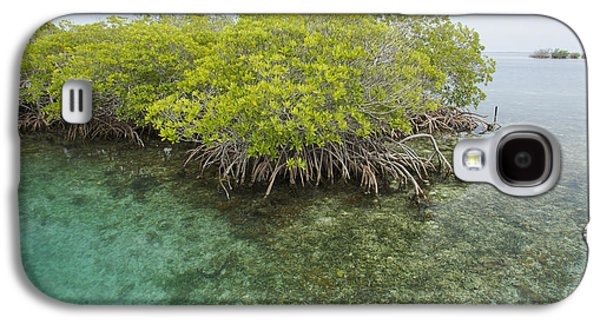 Red Mangrove Trees On An Offshore Galaxy S4 Case
