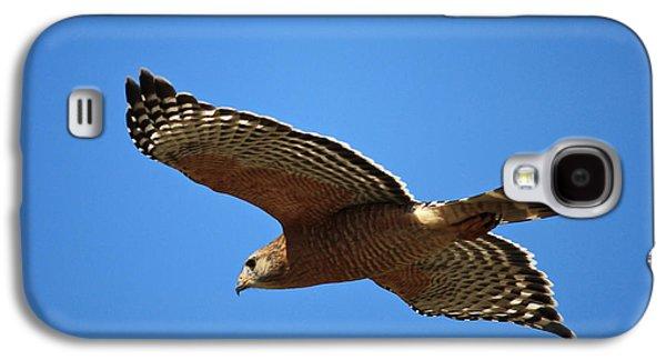 Red Shouldered Hawk In Flight Galaxy S4 Case by Carol Groenen