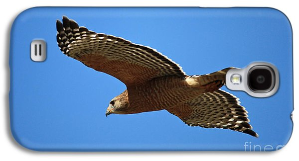 Red Shouldered Hawk In Flight Galaxy S4 Case by Carol Groenen