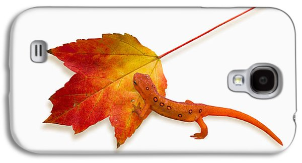 Red Spotted Newt Galaxy S4 Case by Ron Jones