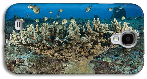Reticulate Humbugs Gather Under Stone Galaxy S4 Case by Steve Jones