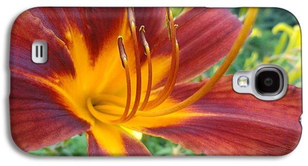 Ripe Blood Orange Galaxy S4 Case by Trish Hale