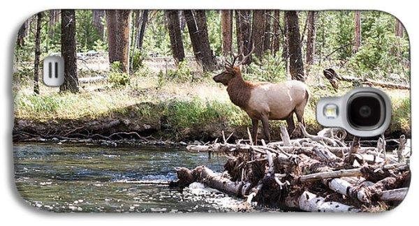 Rocky Mountain Elk Galaxy S4 Case by Cindy Singleton
