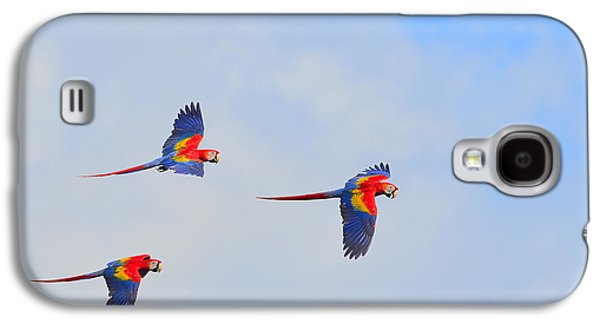 Scarlet Macaws Galaxy S4 Case by Tony Beck