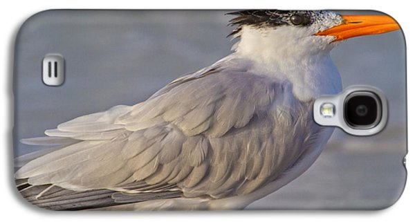 Siesta Key Royal Tern Galaxy S4 Case by Betsy Knapp