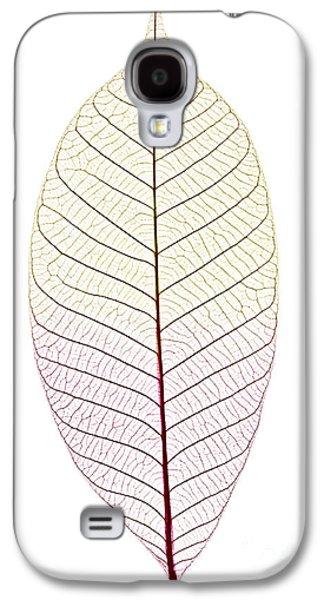 Skeleton Leaf Galaxy S4 Case by Elena Elisseeva