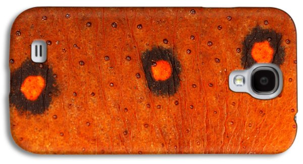 Skin Of Eastern Newt Galaxy S4 Case by Ted Kinsman