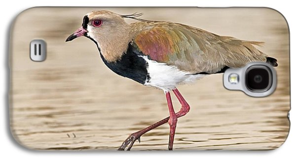 Southern Lapwing Galaxy S4 Case by Tony Camacho