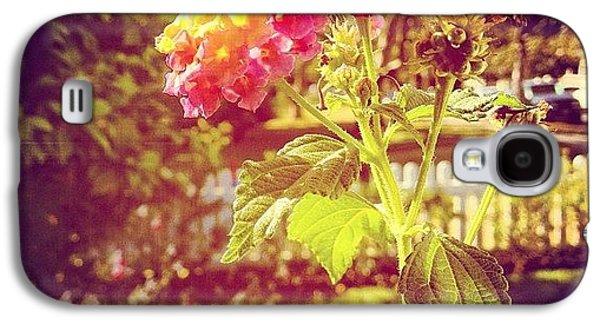 Beautiful Galaxy S4 Case - #sunlight #beautiful #flower by Cortney Herron