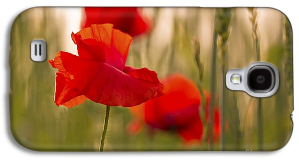 Sunset Poppies. Galaxy S4 Case by Clare Bambers