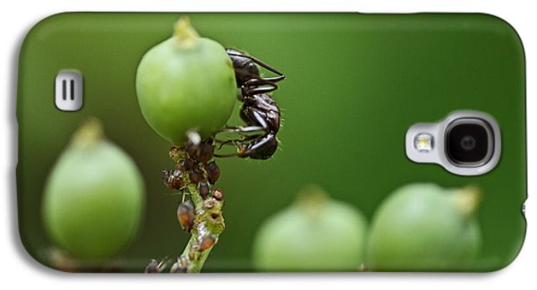 Ant Galaxy S4 Case - Tending The Herd by Susan Capuano