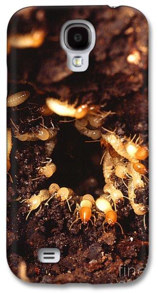 Termite Nest Galaxy S4 Case