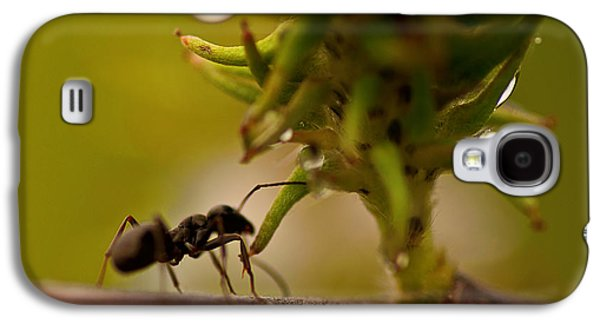 Ant Galaxy S4 Case - The Harvester by Susan Capuano