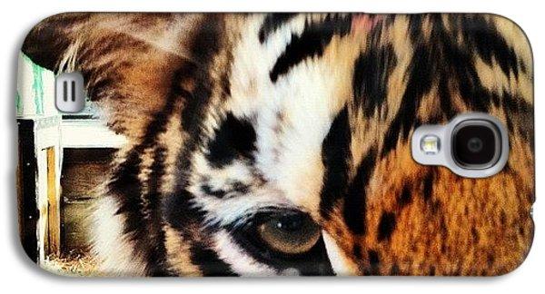 Cool Galaxy S4 Case - Tiger by Lea Ward