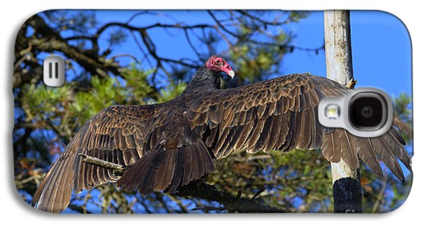 Turkey Vulture With Wings Spread Galaxy S4 Case by Sharon Talson