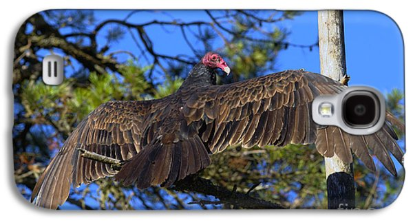 Turkey Vulture With Wings Spread Galaxy S4 Case