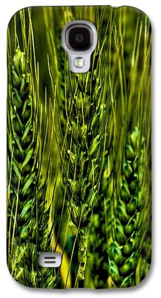 Unripened Wheat Galaxy S4 Case by David Patterson
