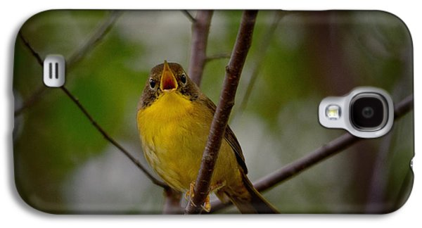 Warbler Galaxy S4 Case - What Warblers Do by Susan Capuano