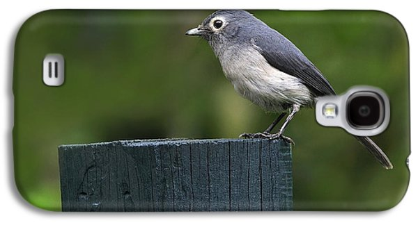 White-eyed Slaty Flycatcher Galaxy S4 Case by Tony Beck