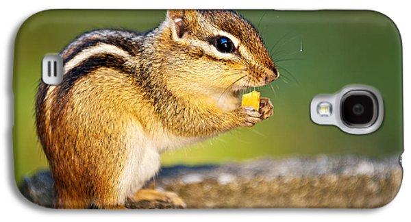 Wild Chipmunk  Galaxy S4 Case by Elena Elisseeva