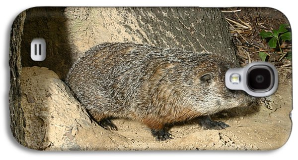 Woodchuck Galaxy S4 Case by Ted Kinsman
