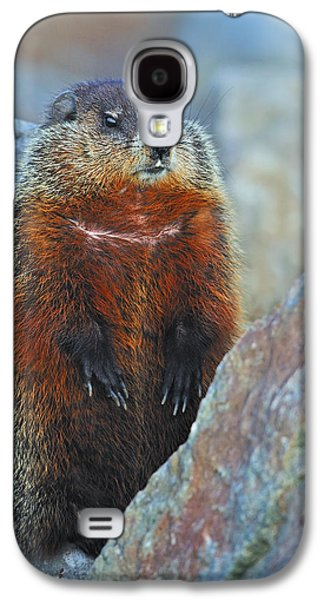 Woodchuck Galaxy S4 Case by Tony Beck