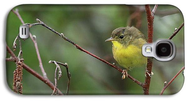Warbler Galaxy S4 Case - Yellowthroated Warbler by Susan Capuano