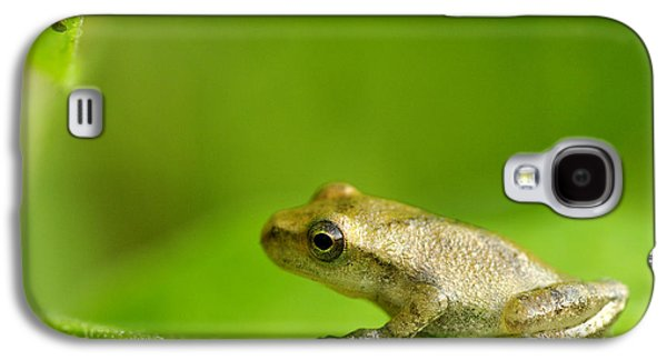 Young Spring Peeper Pseudacris Crucifer Galaxy S4 Case by Steeve Marcoux