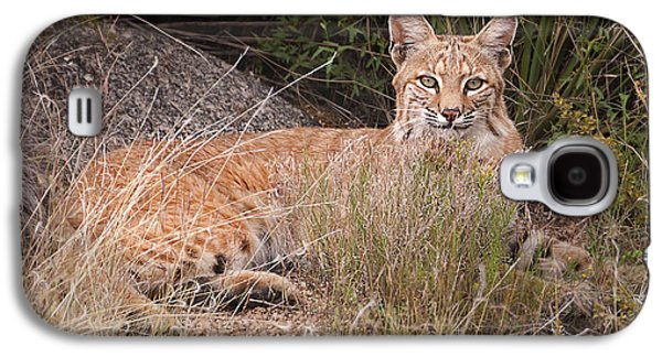 Bobcats Photographs Galaxy S4 Cases -  Bobcat at Rest Galaxy S4 Case by Alan Toepfer