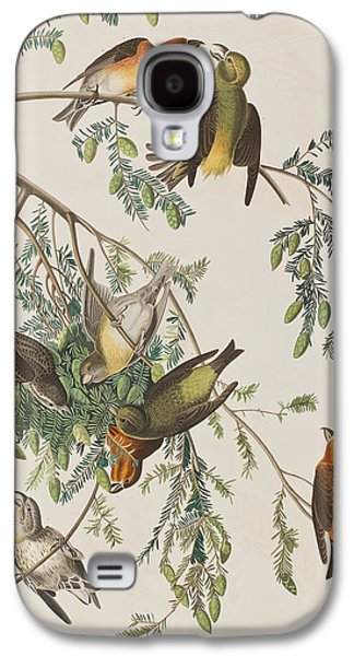 Crossbill Galaxy S4 Case - American Crossbill by John James Audubon