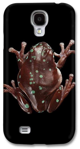 Australian Green Tree Frog, Or Litoria Caerulea Isolated Black Background Galaxy S4 Case by Sergey Taran