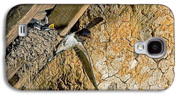 Barn Swallow Hirundo Rustica Galaxy S4 Case by Gerard Lacz