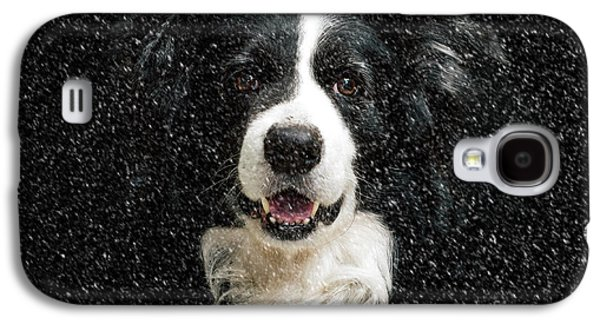 Border Collie Galaxy S4 Case by Nichola Denny