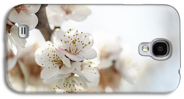 Cherry Blossom Galaxy S4 Case