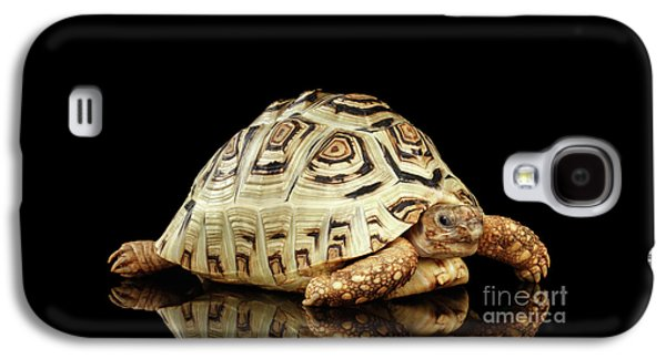Closeup Leopard Tortoise Albino,stigmochelys Pardalis Turtle With White Shell On Isolated Black Back Galaxy S4 Case by Sergey Taran
