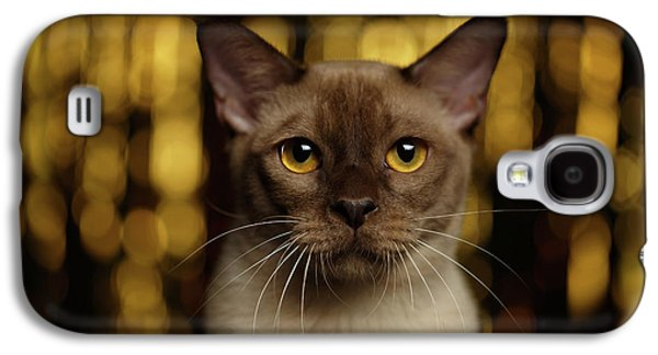 Cat Galaxy S4 Case - Closeup Portrait Burmese Cat On Happy New Year Background by Sergey Taran