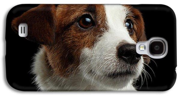 Dog Galaxy S4 Case -  Closeup Portrait Of Jack Russell Terrier Dog On Black by Sergey Taran