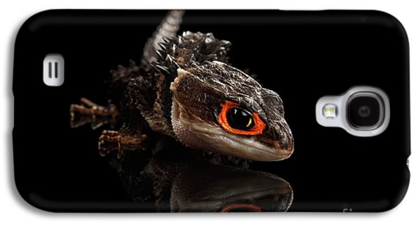 Closeup Red-eyed Crocodile Skink, Tribolonotus Gracilis, Isolated On Black Background Galaxy S4 Case by Sergey Taran