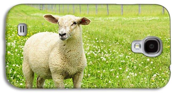 Rural Scenes Galaxy S4 Case - Cute Young Sheep by Elena Elisseeva