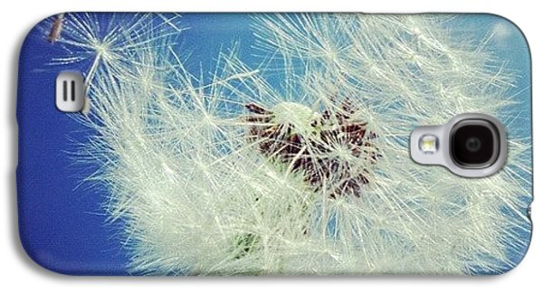 Blue Galaxy S4 Case - Dandelion And Blue Sky by Matthias Hauser