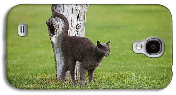Domestic Cat Galaxy S4 Case by Gerard Lacz