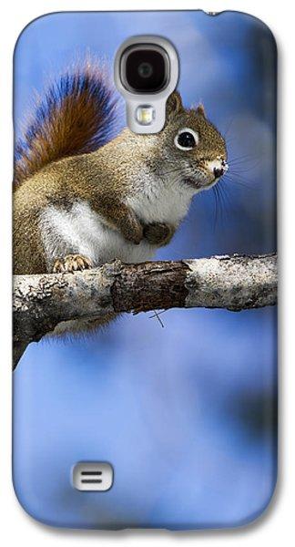 Eastern Grey Squirrel  Sciurus Galaxy S4 Case