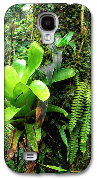 Epiphyte Galaxy S4 Cases - El Yunque National Forest Galaxy S4 Case by Thomas R Fletcher