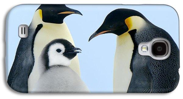Emperor Penguin Aptenodytes Forsteri Galaxy S4 Case by Jan Vermeer