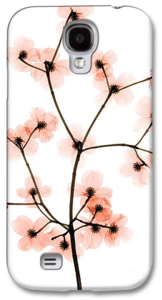Flowering Dogwood X-ray Galaxy S4 Case by Ted Kinsman