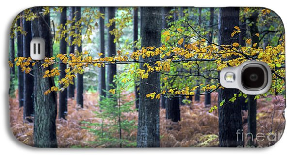 Forest Branch Galaxy S4 Case by Svetlana Sewell