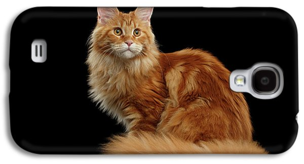 Cat Galaxy S4 Case - Ginger Maine Coon Cat Isolated On Black Background by Sergey Taran