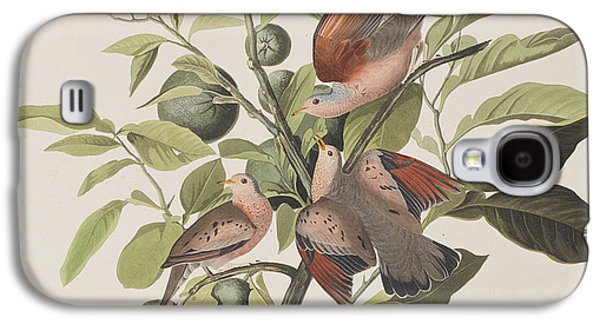 Ground Dove Galaxy S4 Case by John James Audubon