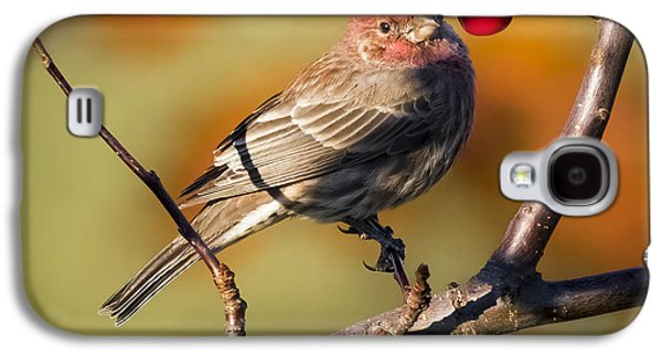 House Finch Galaxy S4 Case